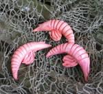 Gulf Fishing Pink Shrimp