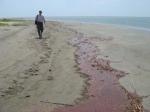 oil spill walking