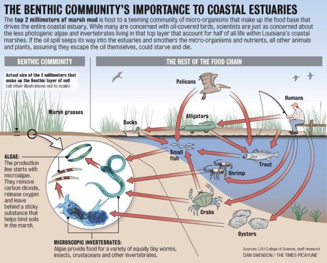 ecosystem sustainability