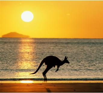 australia_kangaroo gulf oil spill
