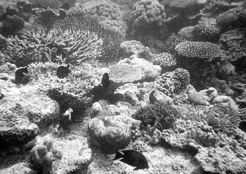 coral reef_dead
