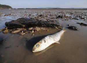 dead fish ecosystem