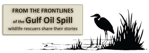 gulf of mexico oil spill Frontlines-graphic