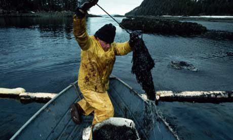 gulf of mexico oil spill victims
