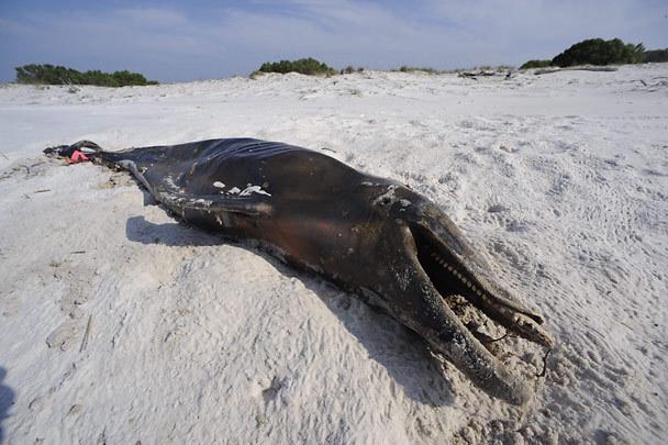 oil spill animal deaths