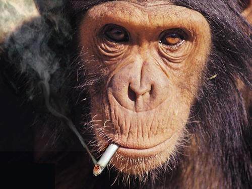 smoke-break