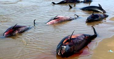 dolphin dead