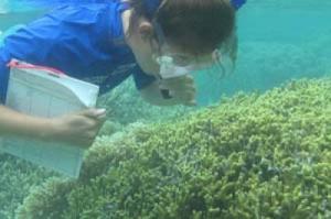 Nitrogen Sewage Coral Reef Ecosystems