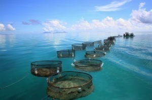 Factory Fish Farming