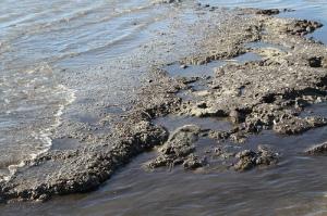 Oil Mats and Long-Term Ecosystem Threats